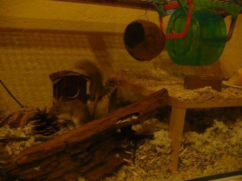 Mauskäfig mit Maushaus