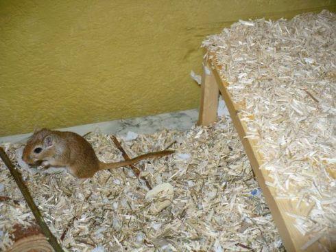 Maushausloser Endstandort mit Maus