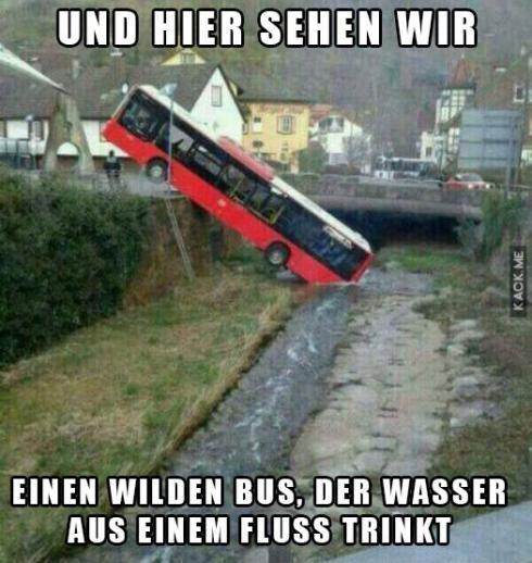 wilder Bus