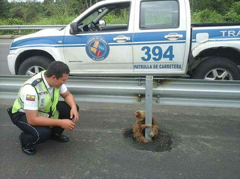 Polizist und Faultier auf der Autobahn